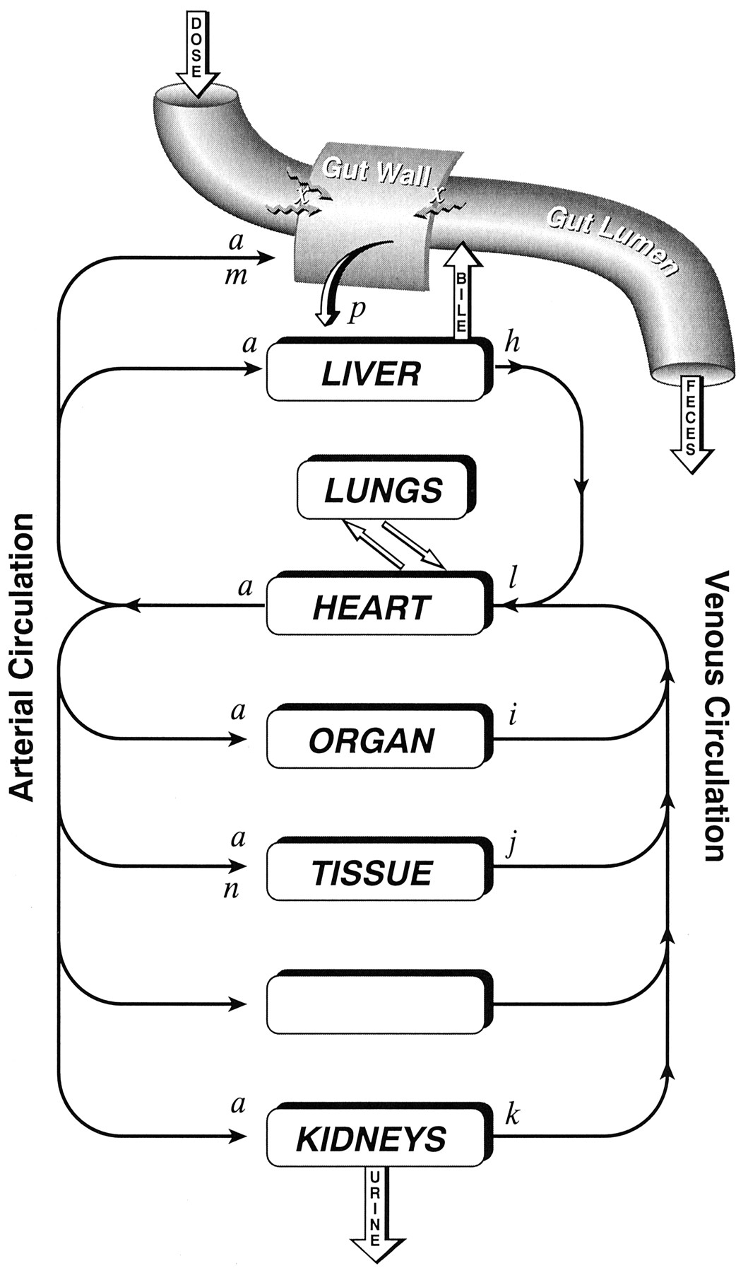 Oral bioavailability and first pass effects drug metabolism download figure pooptronica