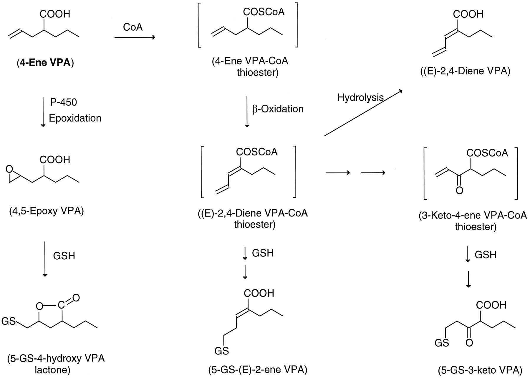 Fs1 On Spectrum >> A Comparative Investigation of 2-Propyl-4-Pentenoic Acid (4-ene VPA) and its α-Fluorinated ...