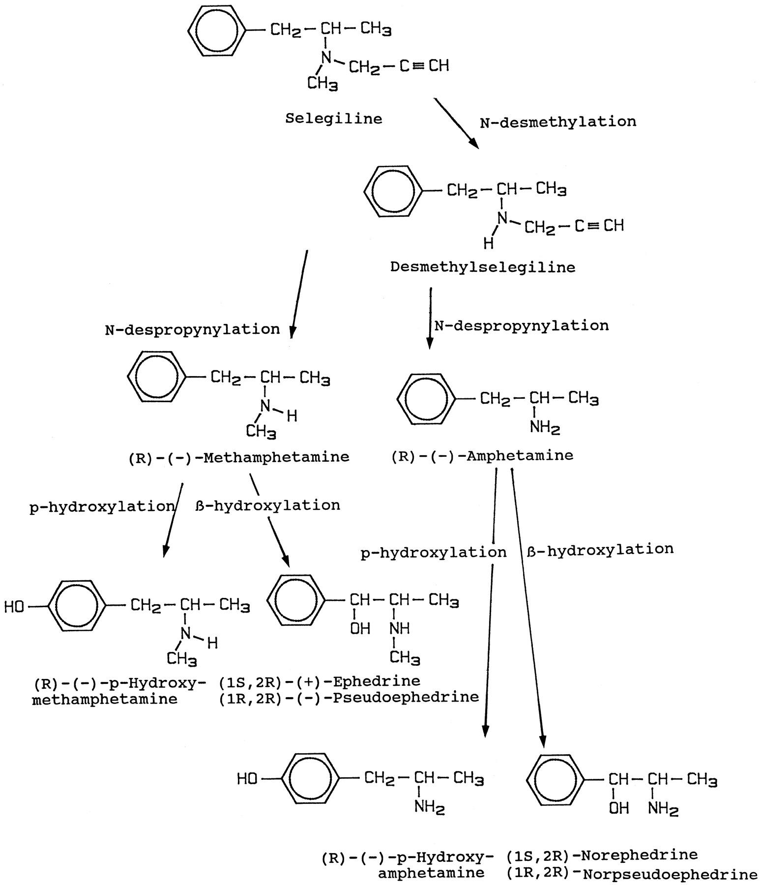 Metabolism of Selegiline in Humans | Drug Metabolism
