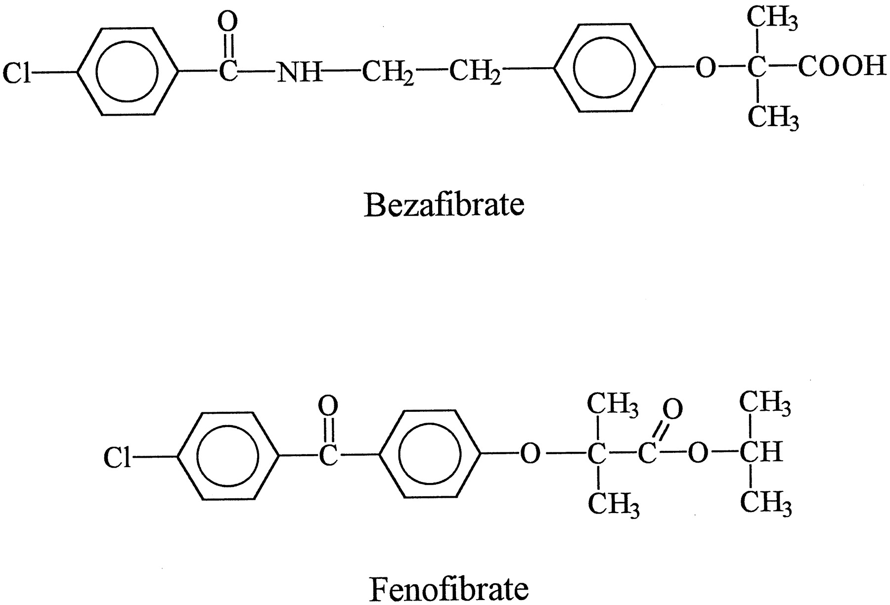 Effects of Fibrates on the Glycine Conjugation of Benzoic Acid in