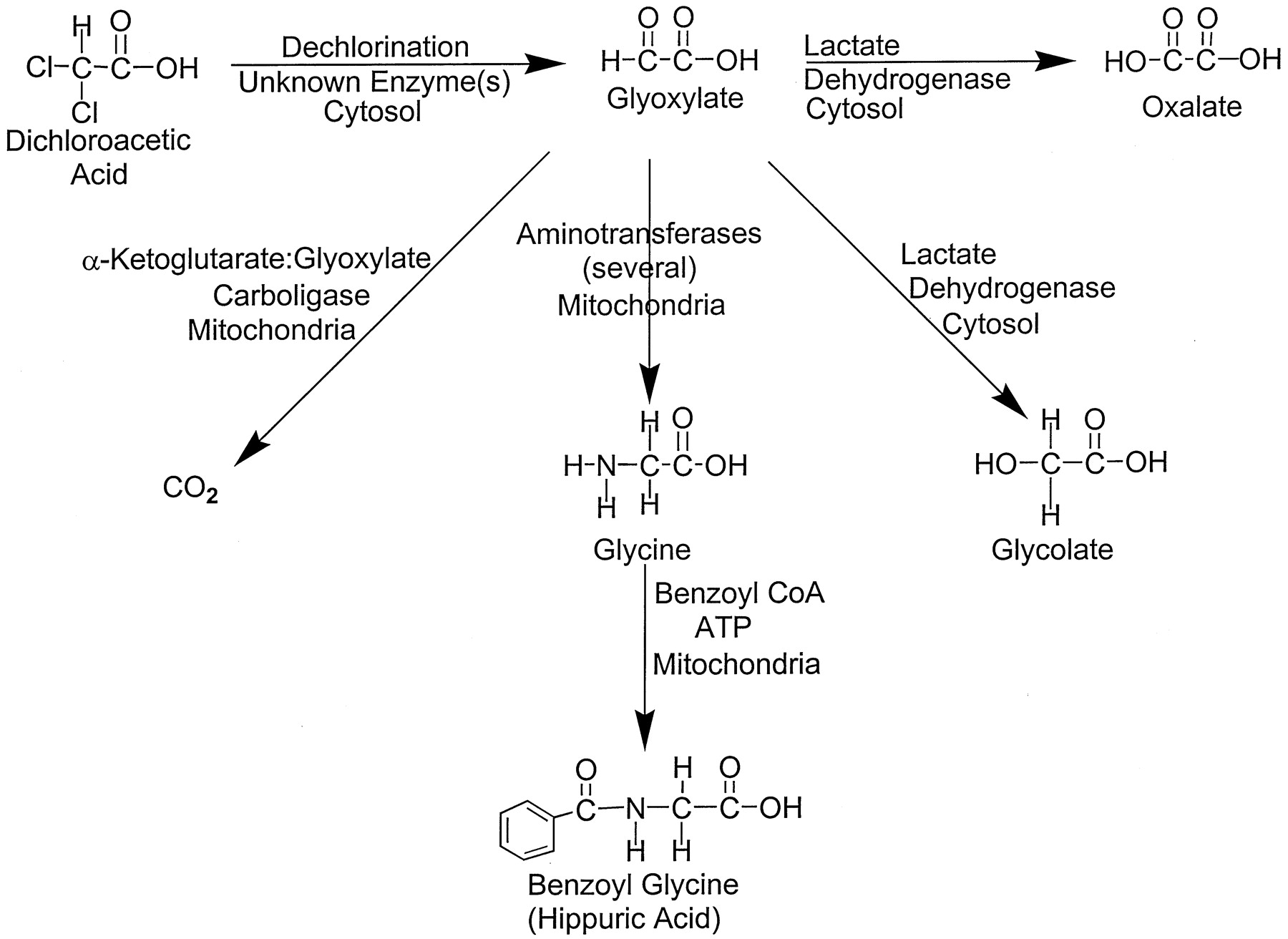 Site of action of dichloroacetate DCA inhibits the mito   Open i ScienceBlogs