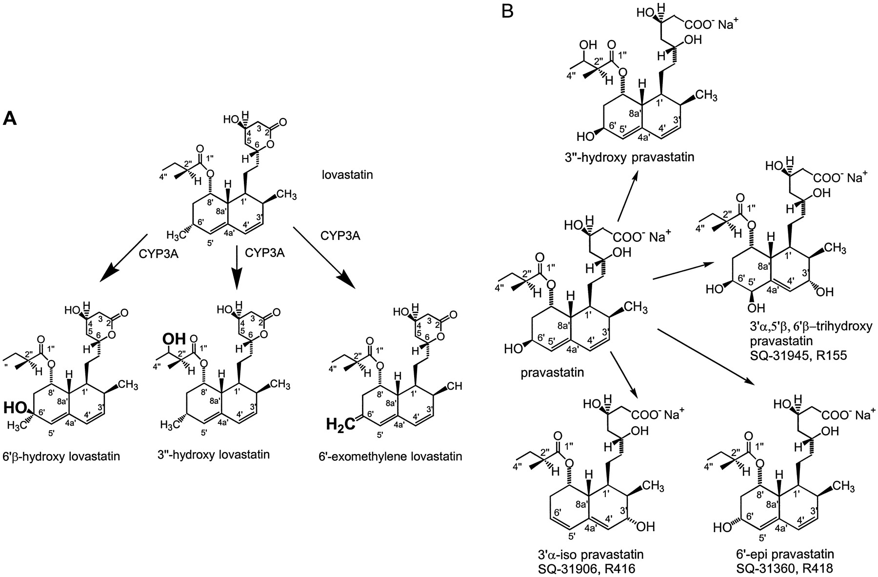 Comparison of Cytochrome P-450-Dependent Metabolism and