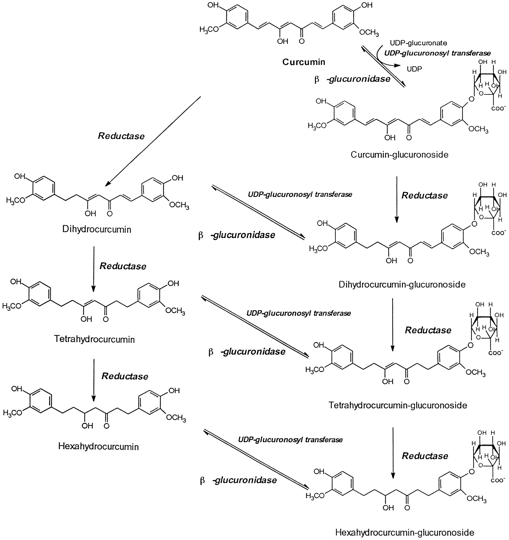 biotransformation of some steroids by aspergillus wentii