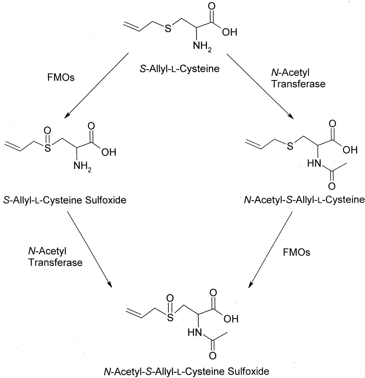 Figure 1 L Cysteine Figure 1  L Cysteine