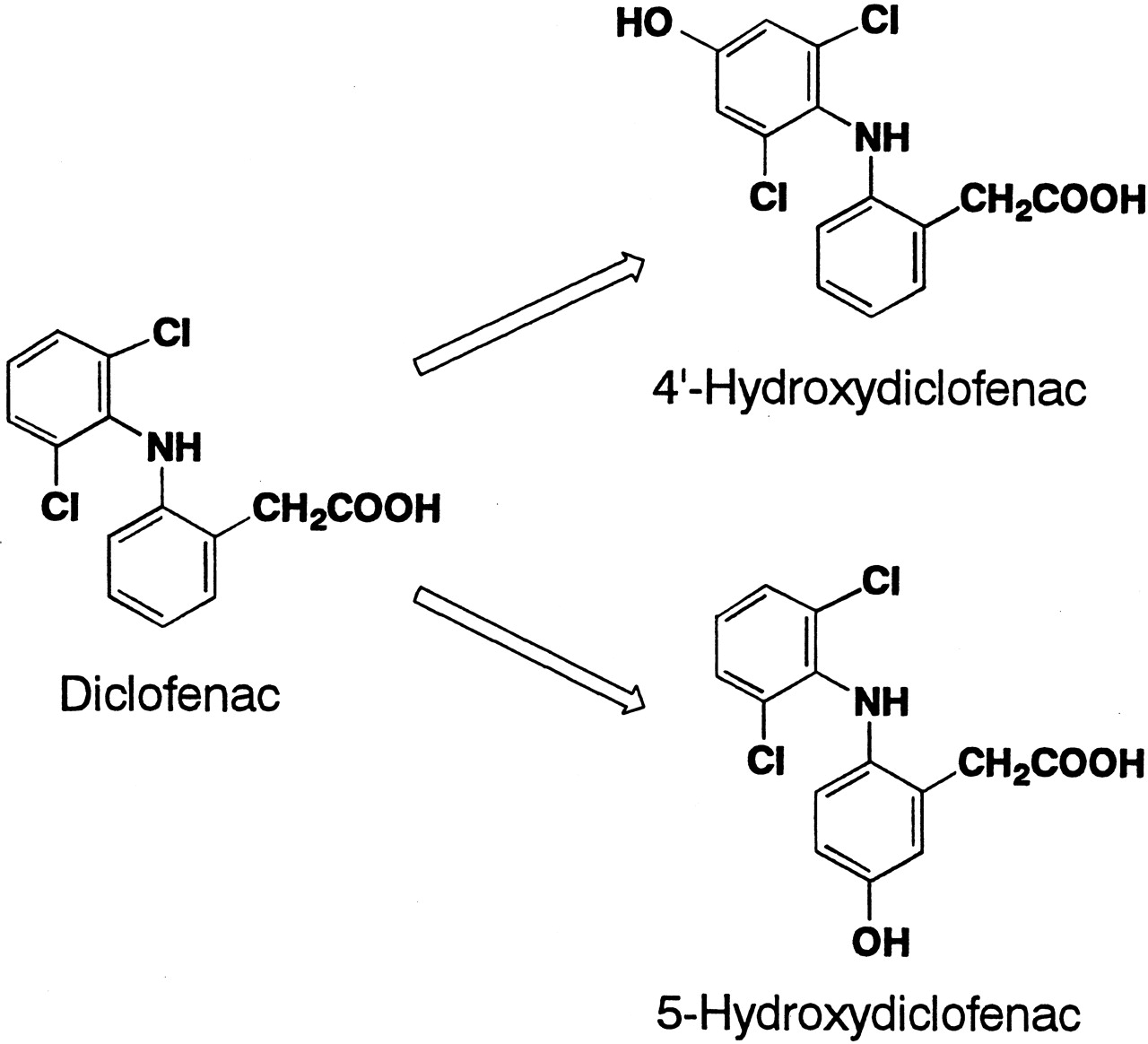 metabolic pathways for diclofenac The metabolomics study further highlights the concern of environmental diclofenac in non-target organisms and the need to investigate the metabolic pathways.