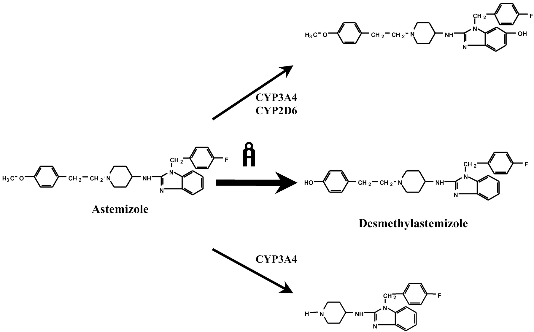 Involvement of CYP2J2 on the Intestinal First-Pass