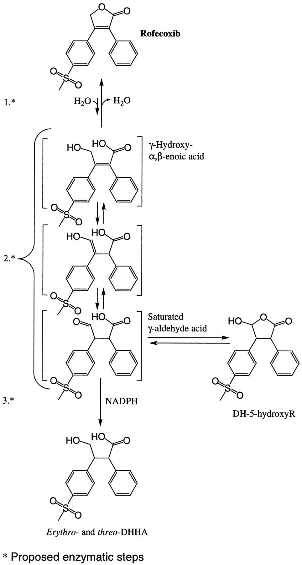 METABOLISM OF ROFECOXIB IN VITRO USING HUMAN LIVER