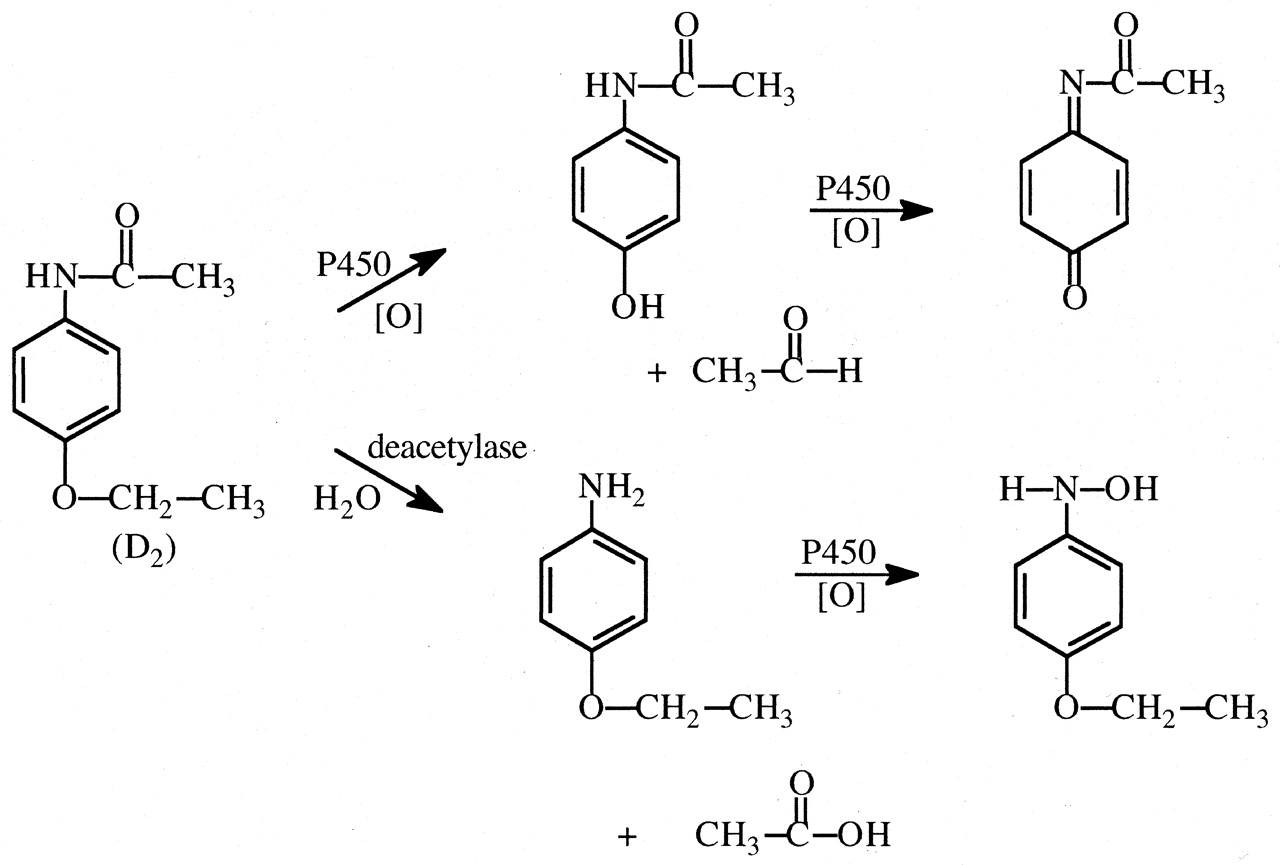 amide synthesis of phenacetin I have 04216g sodium acetate/ 0266g of p-phenetidine/density of p-phenetidine is 1065 g/ml/ the product (phenacetin) weighed 00189 g and the molar mass of phenacetin is 179 the molar mass of sodium acetate is 8203 the molar mass of p-phenetidine is 13718.