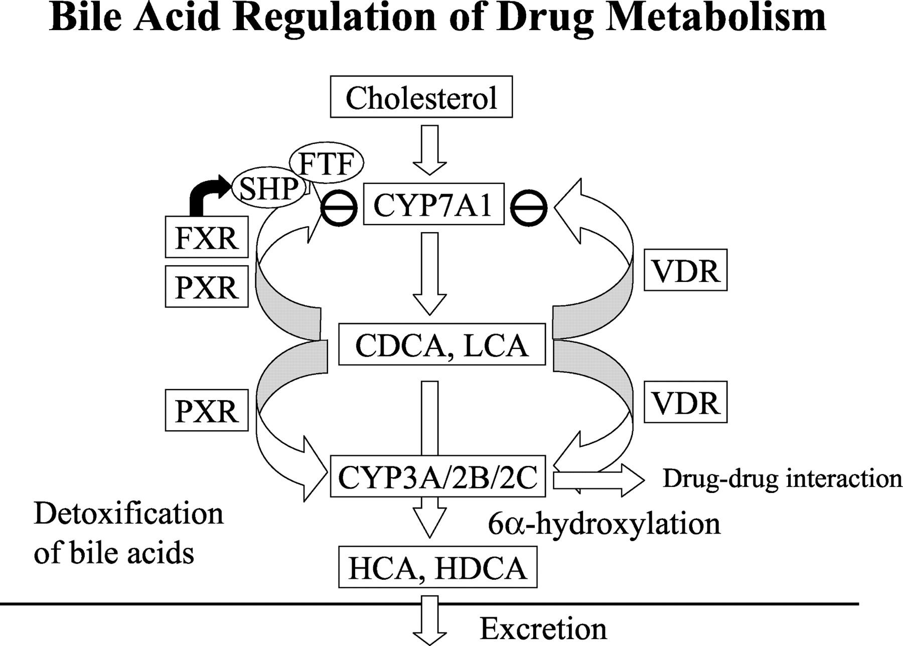 Peptidyl amidating enzymedica