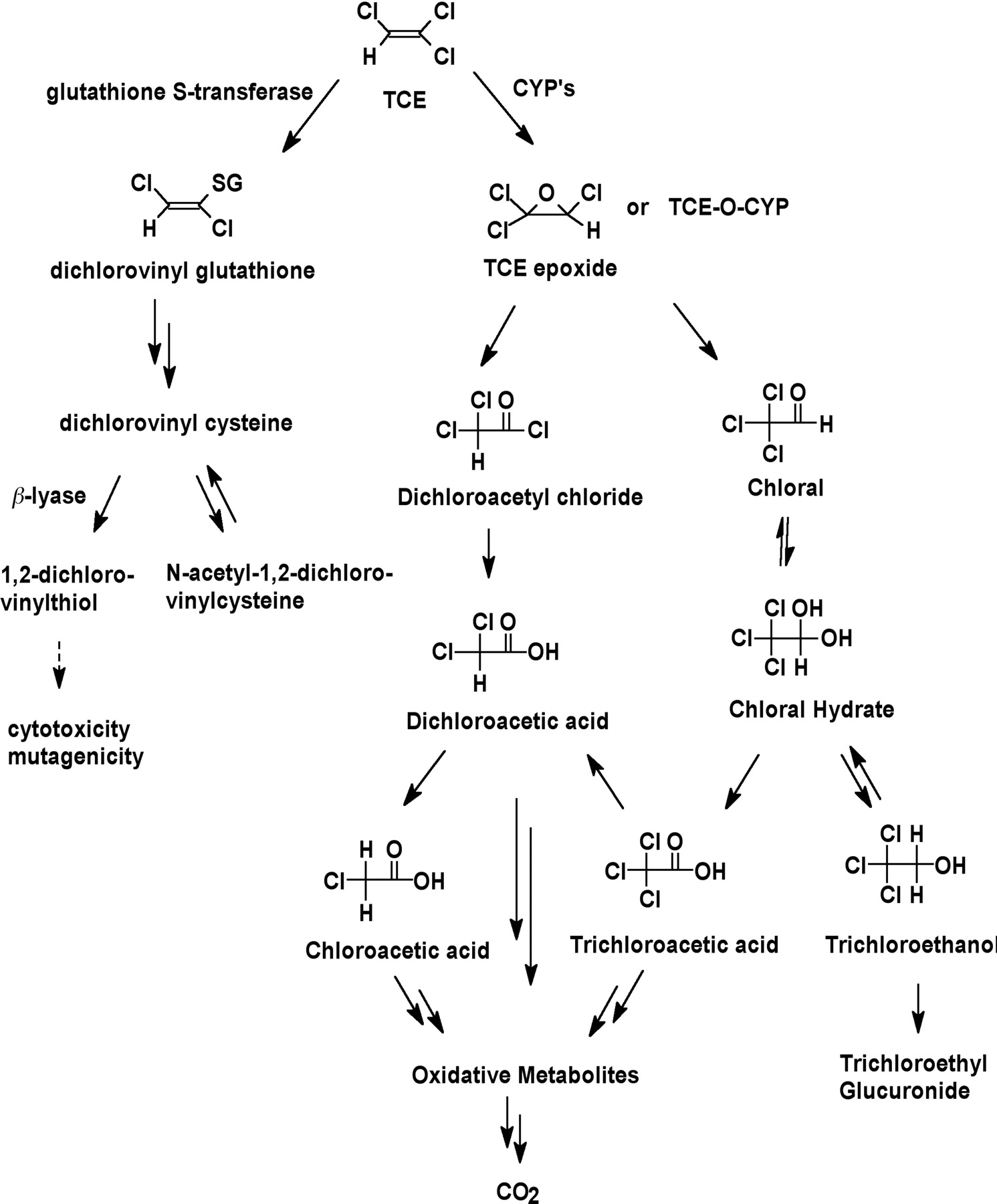 Comparative metabolism and disposition of for What does tce mean