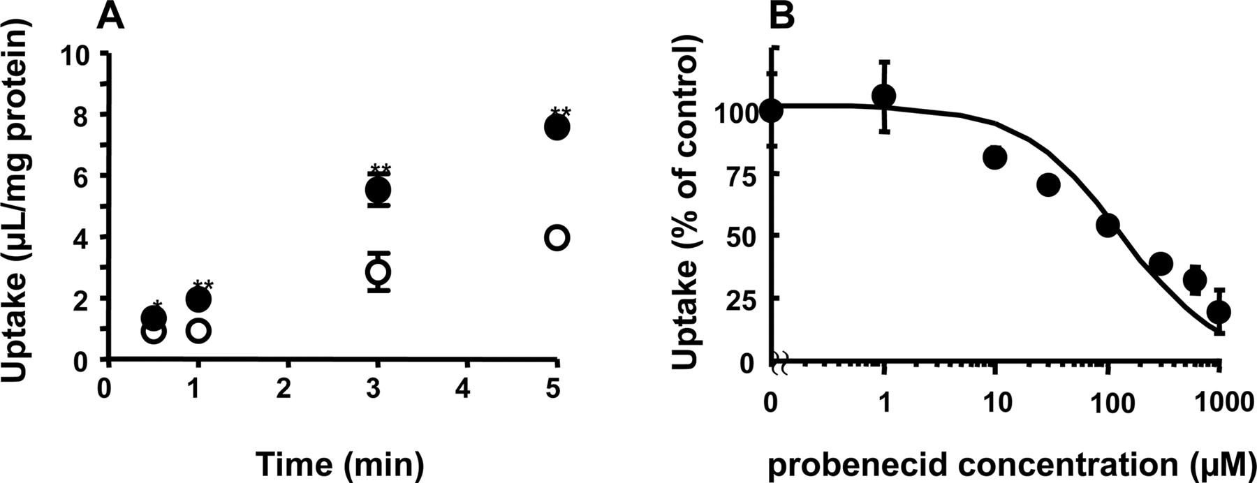 Probenecid And Penicillin Drug Interaction