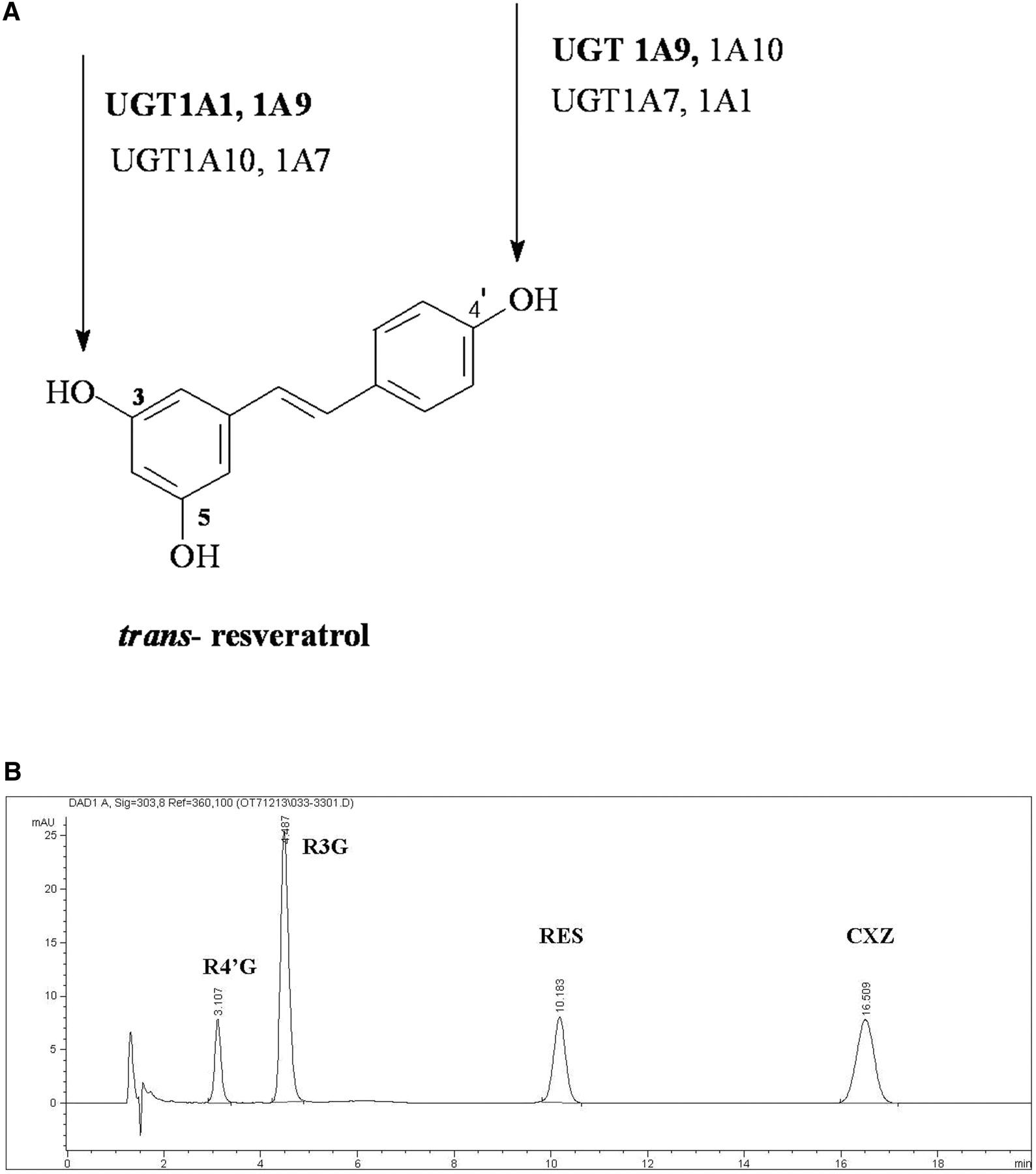 Resveratrol Trans Resveratrol 3 5 4 Trihydroxy Trans Stilbene