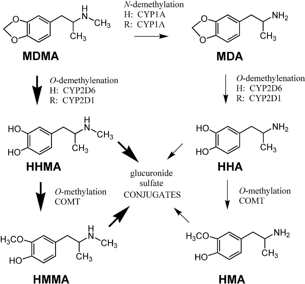 major route of metabolism of klonopin withdrawal symptoms