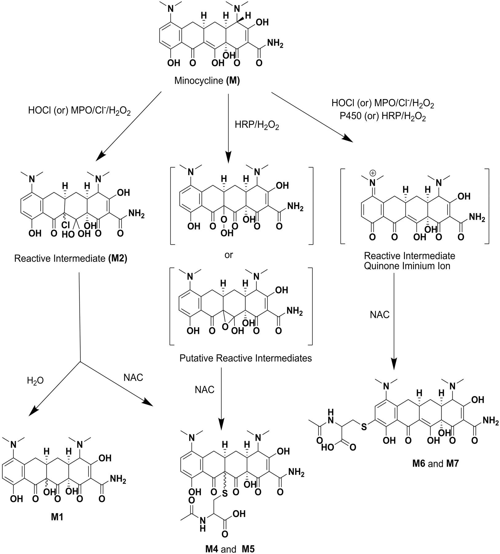ciprofloxacin for