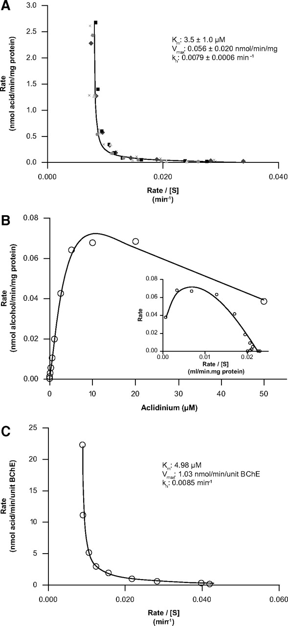 Identification Of The Human Enzymes Responsible For The Enzymatic