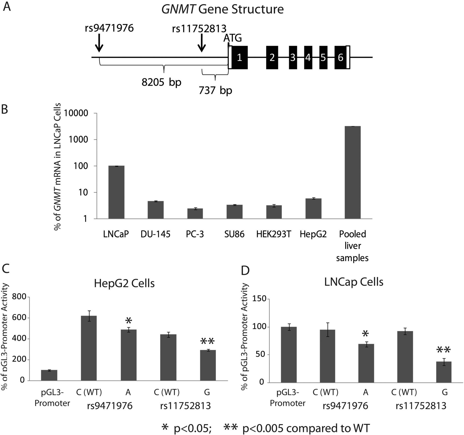 Human Liver Methionine Cycle: MAT1A and GNMT Gene Resequencing ...
