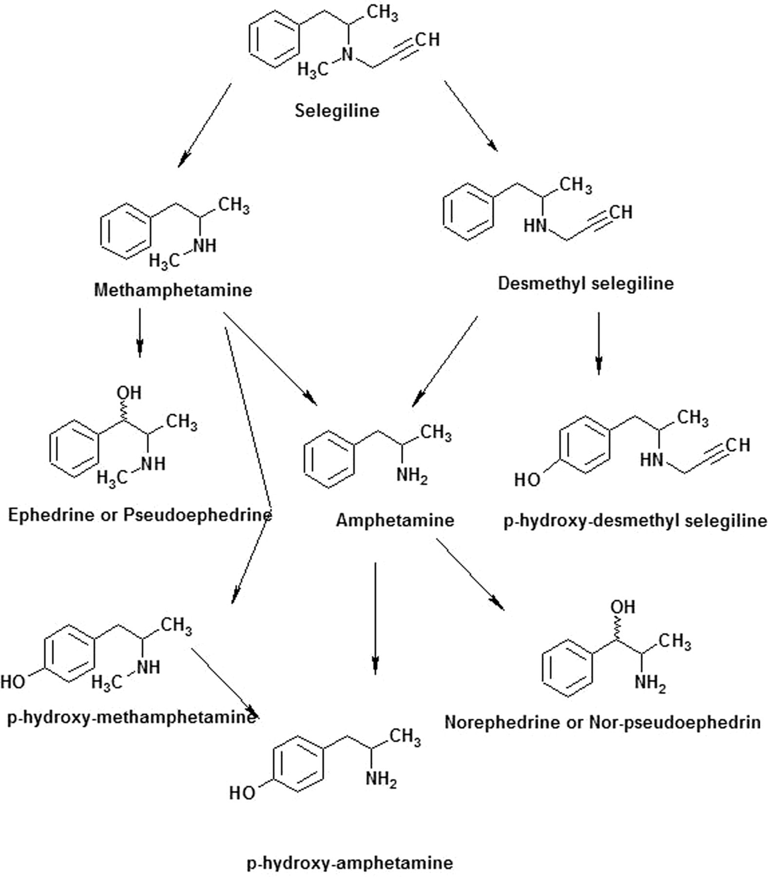 Inhibition of Bupropion Metabolism by Selegiline: Mechanism-Based