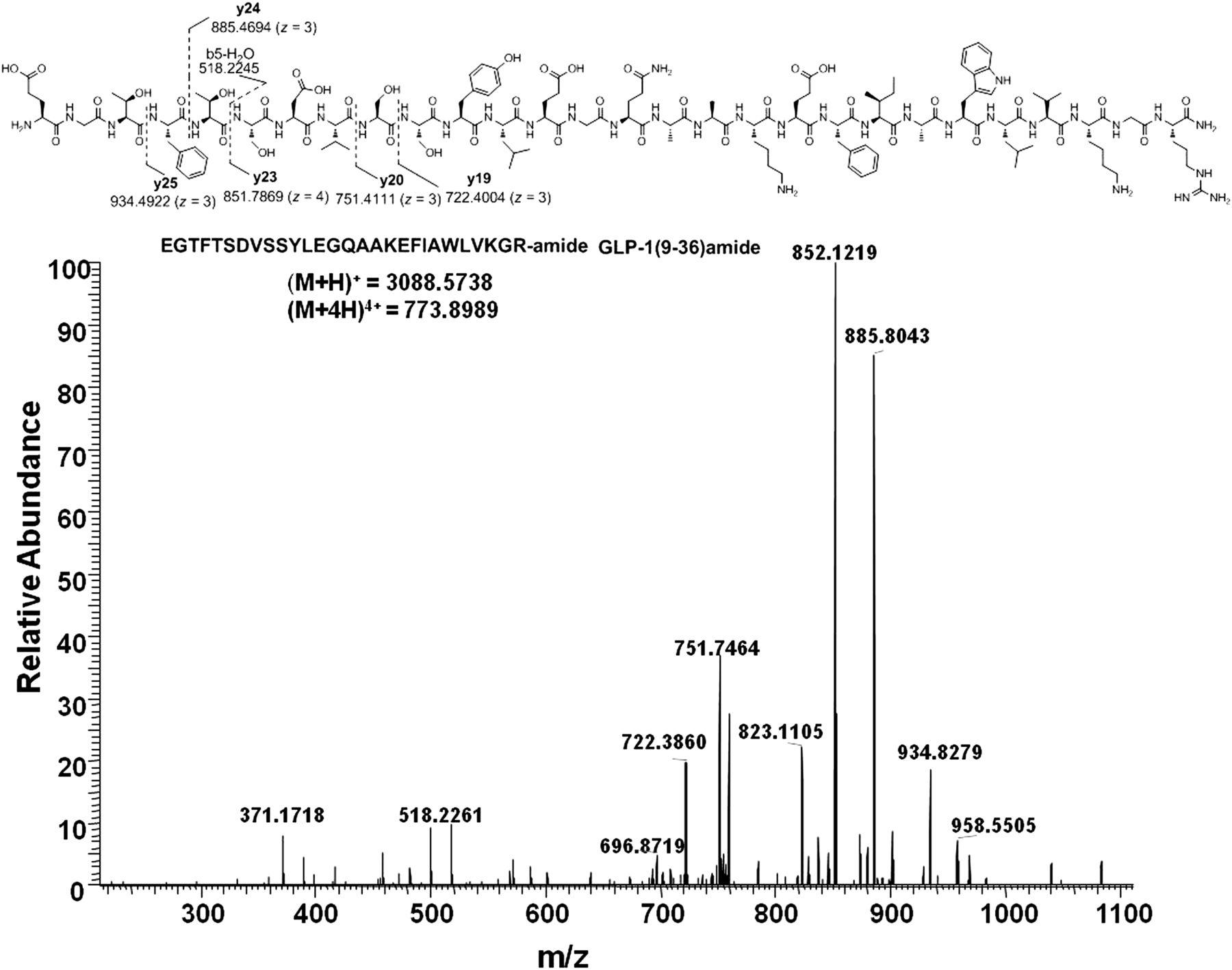 In Vitro Metabolism of the Glucagon-Like Peptide-1 (GLP-1