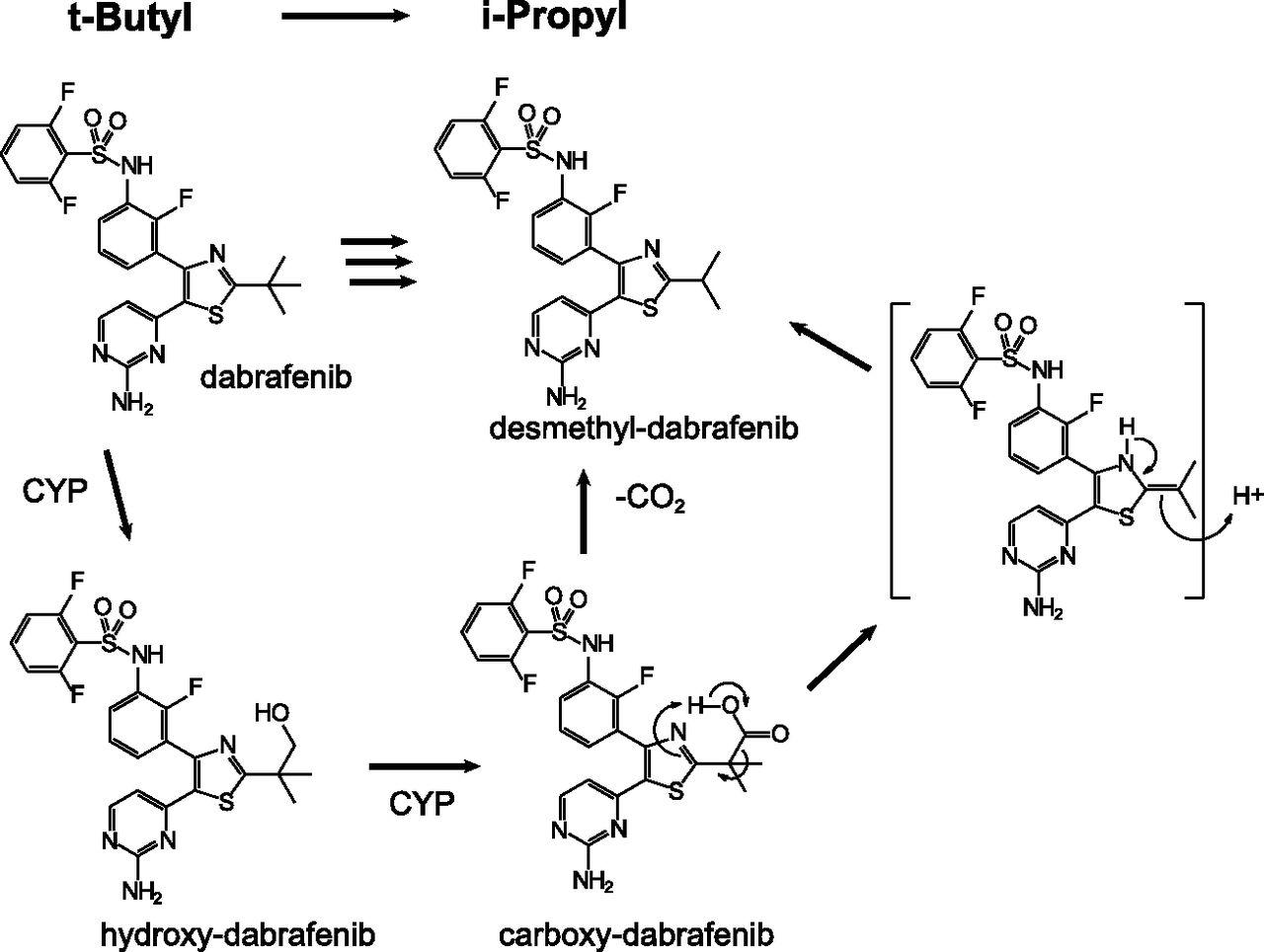 Metabolism and Disposition of Oral Dabrafenib in Cancer ... Dabrafenib