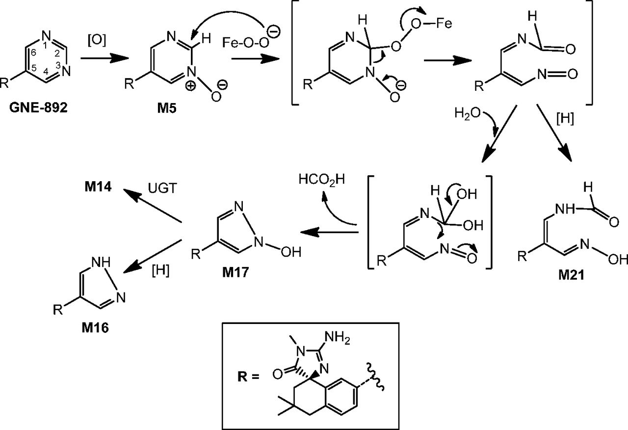 elucidating the mechanism of cytochrome p450 mediated pyrimidine