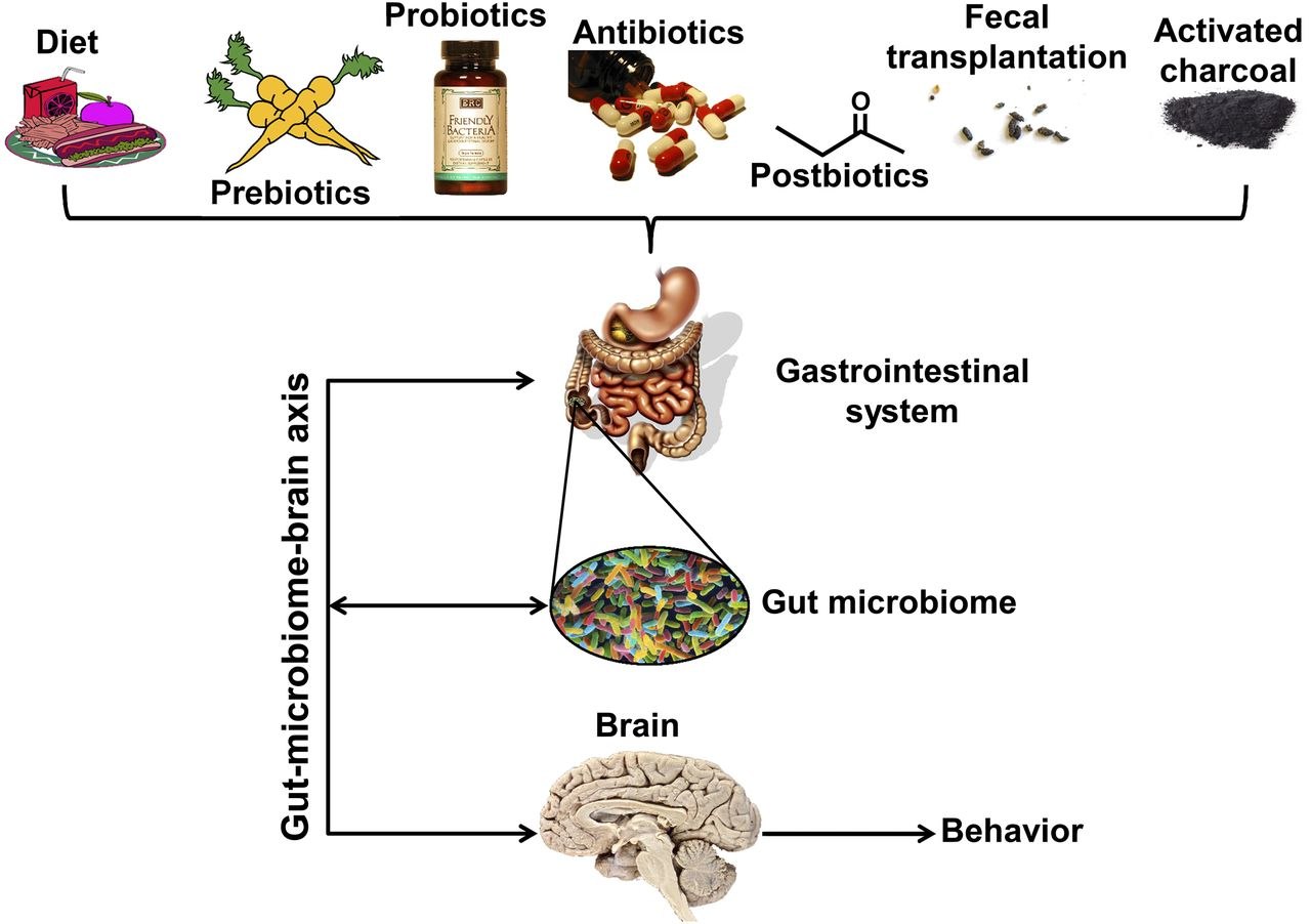 Microbiome Disturbances And Autism Spectrum Disorders