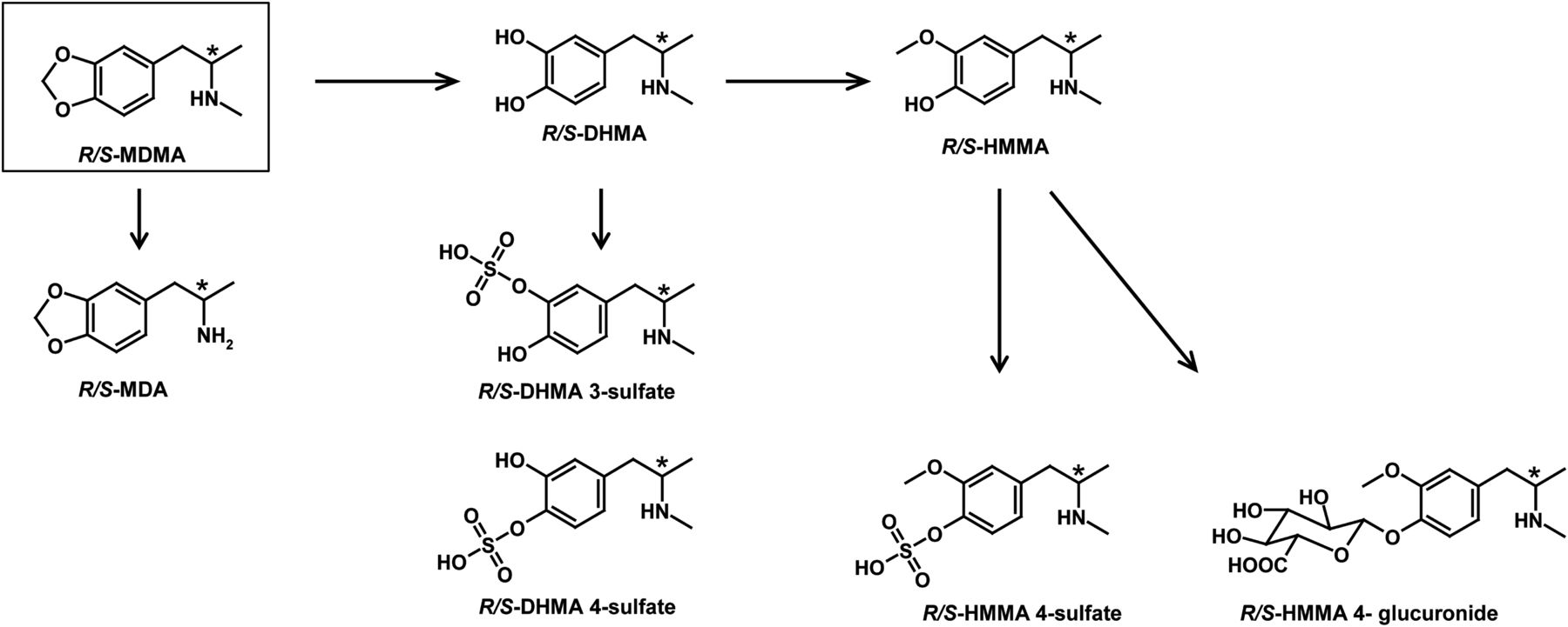 Determination of MDMA and Its Three Metabolites in the Rat Perfused Liver