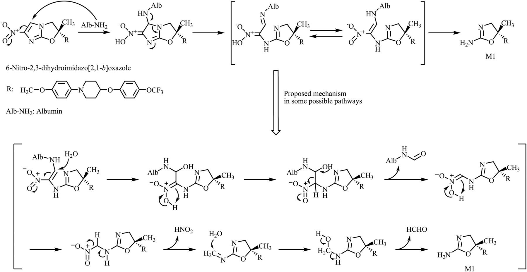 metabolic mechanism of delamanid  a new anti