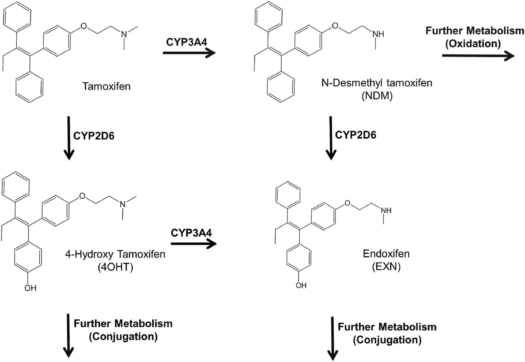 sigma aldrich metabolic pathways pdf