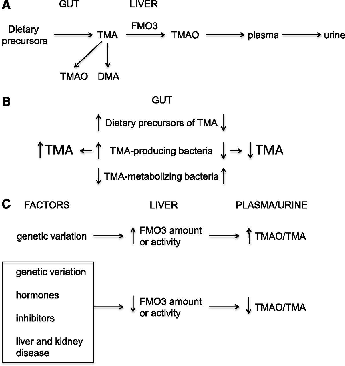 Trimethylamine and Trimethylamine N-Oxide, a Flavin-Containing