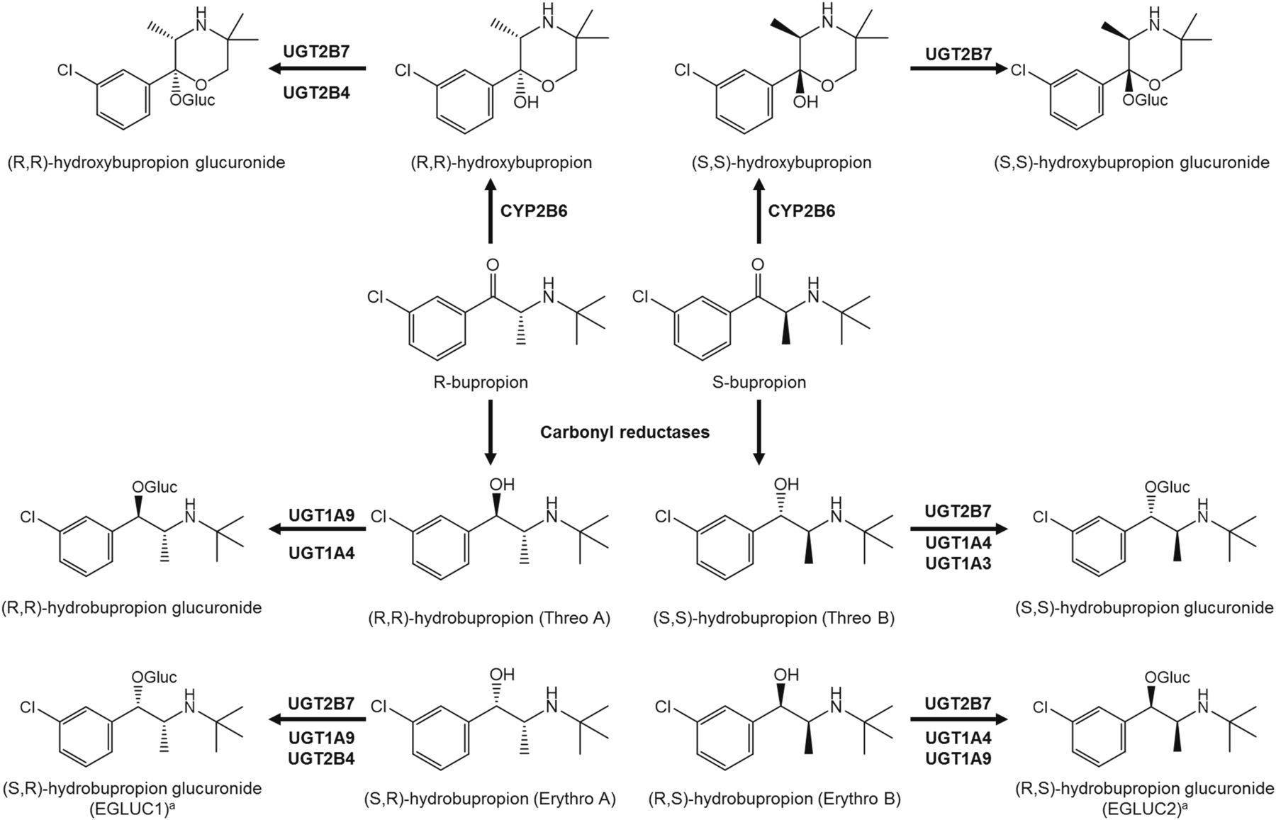 bupropion metabolites