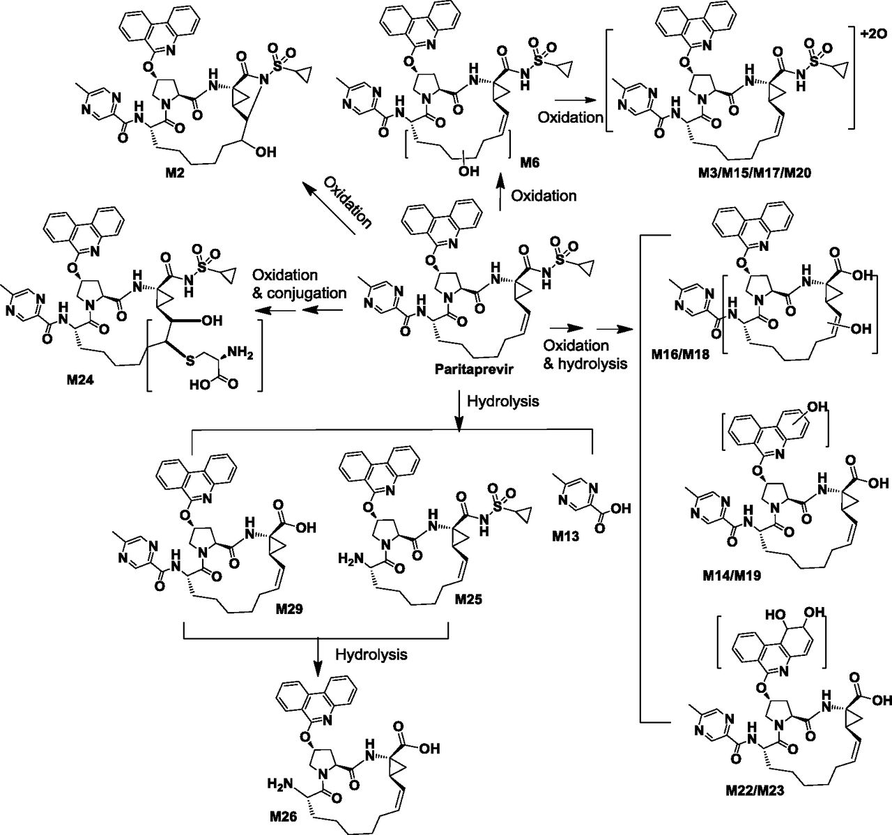 Metabolism and Disposition of the Hepatitis C Protease Inhibitor