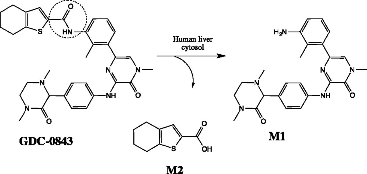 Going Beyond Common Drug Metabolizing Enzymes: Case
