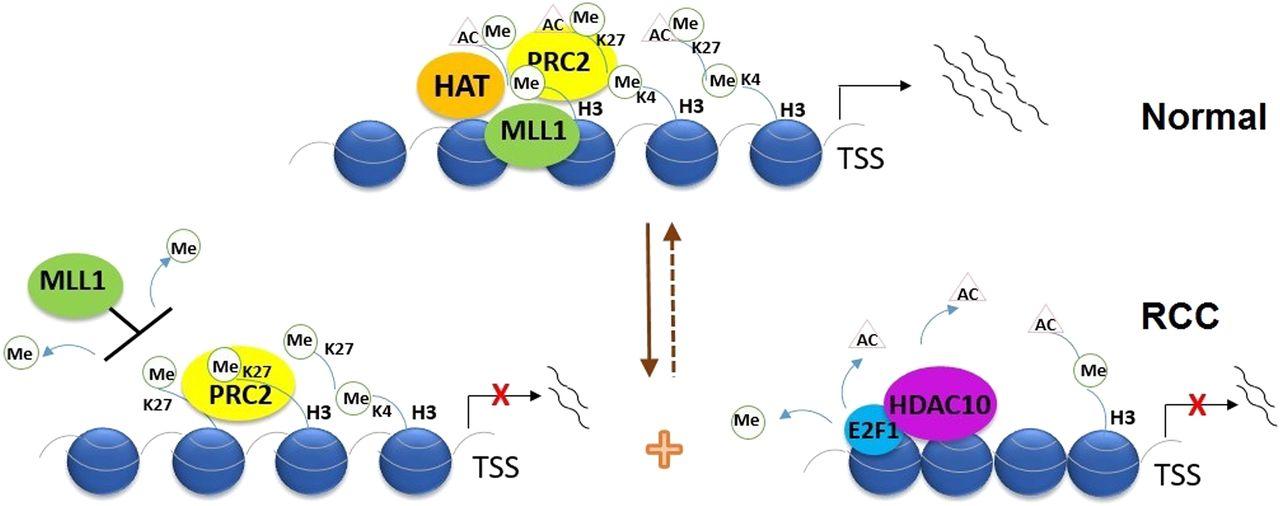 Histone H3 Lysine 4 Trimethylation, Lysine 27 Trimethylation