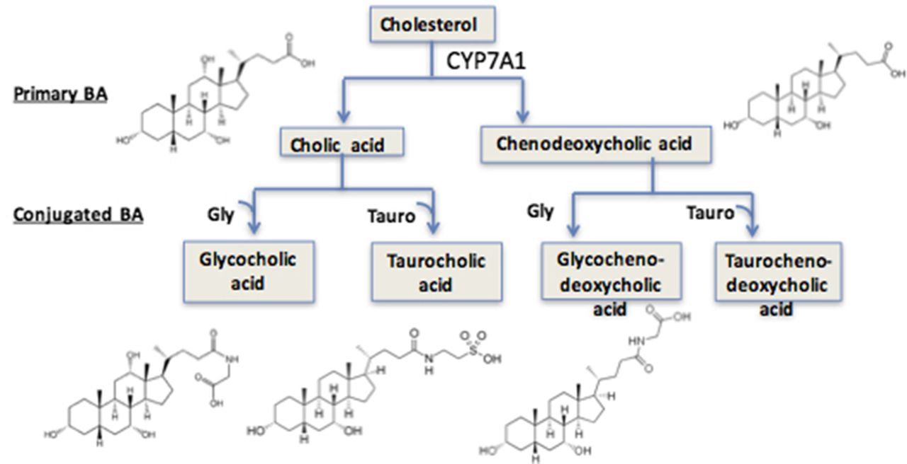 acid sythesis Figure i2 original synthesis of veronal (5,5'-diethylbarbituric acid) (3) 2 figure i3 structure of the active anti-epileptic phenobarbital (4) 3 figure i4 substitutions of the original barbituric acid at either c- 5 or c- 2 4.