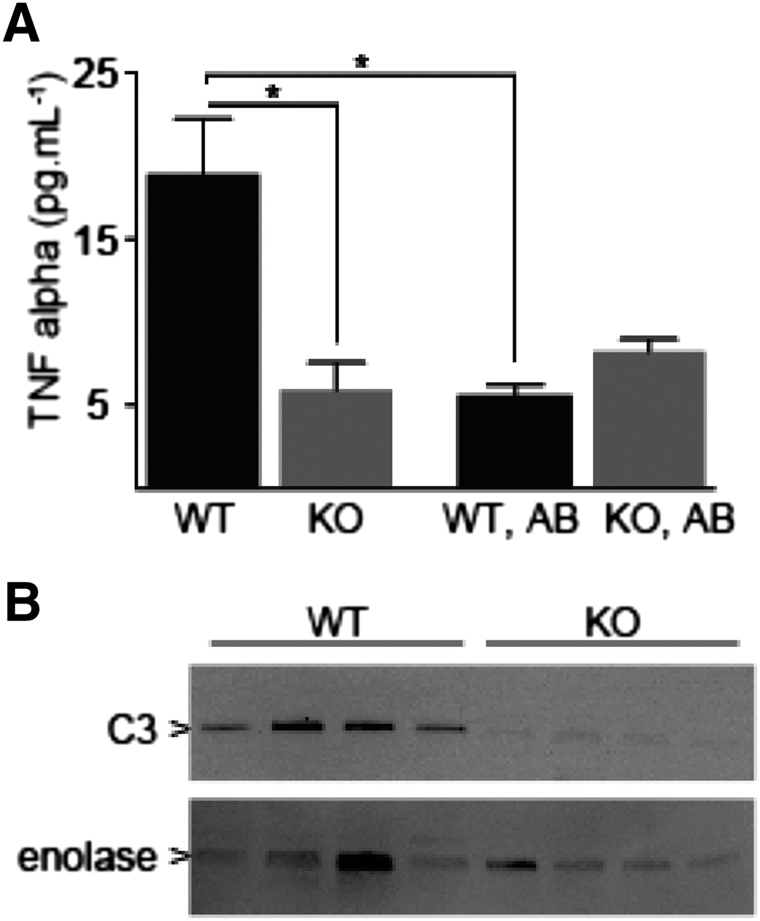 Identification of Flavin Containing Monooxygenase 5 FMO5 as a